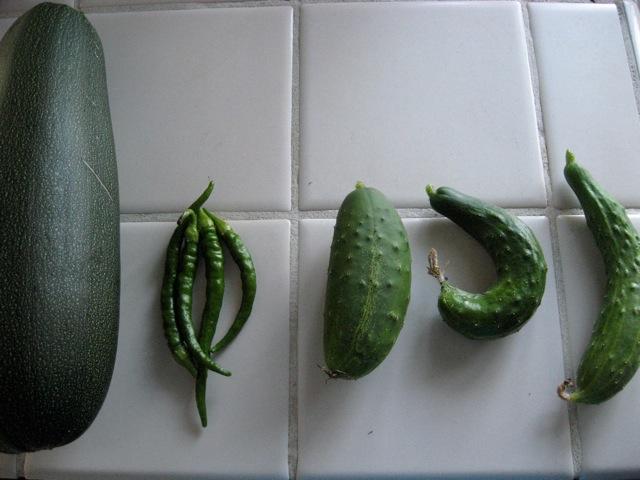 zucchini, peppers, burper cucumbers