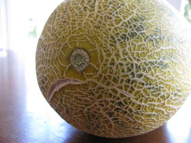 afghan melon with a little scar